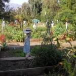 Mendocino Community Garden