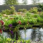 Irises Lilies Pond