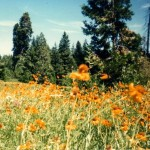 Powderhorn Meadow