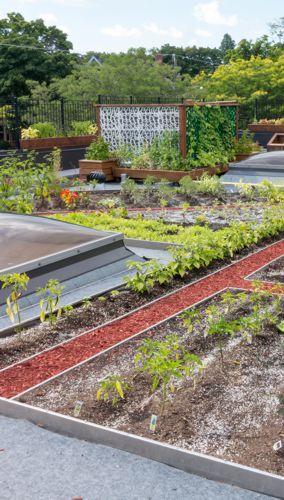 Sustainability-Garden-Vertical