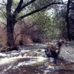 Tule River