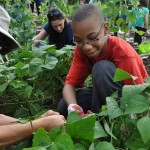 Teaching Children How to Garden