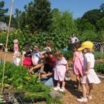 Drop in and Dig Farm Garden